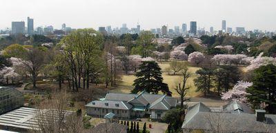 事務所からの眺望(春)