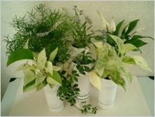 植物栽培用器(Nu-style)